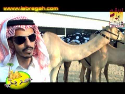 عزبة/ حمد بن هامله المري