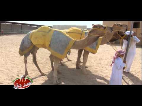 عزبة/ حميد جاسم بن براك المزروعي