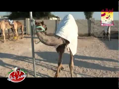 عزبة/ عبدالهادي بن حسين البريدي