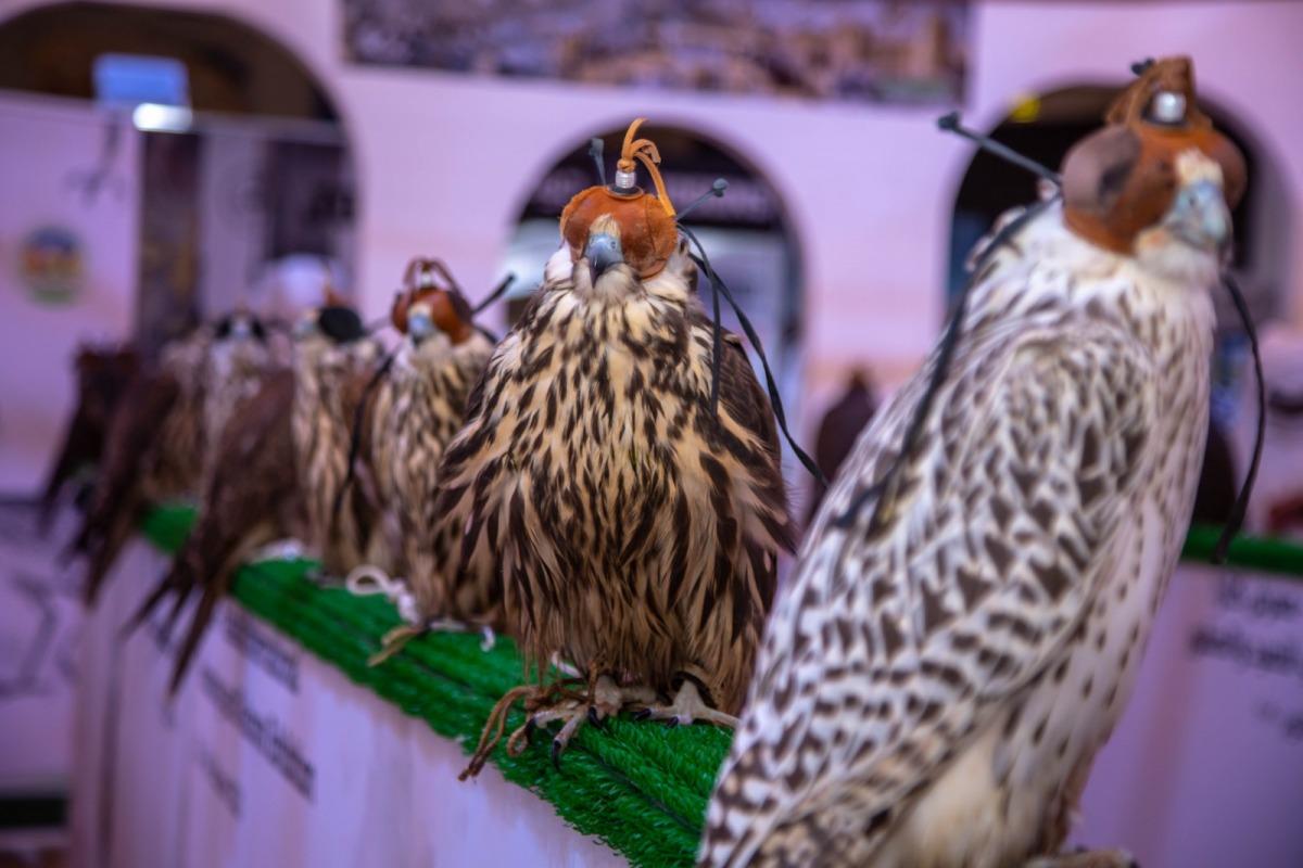 انطلاق معرض كتارا الدولي الرابع للصيد والصقور