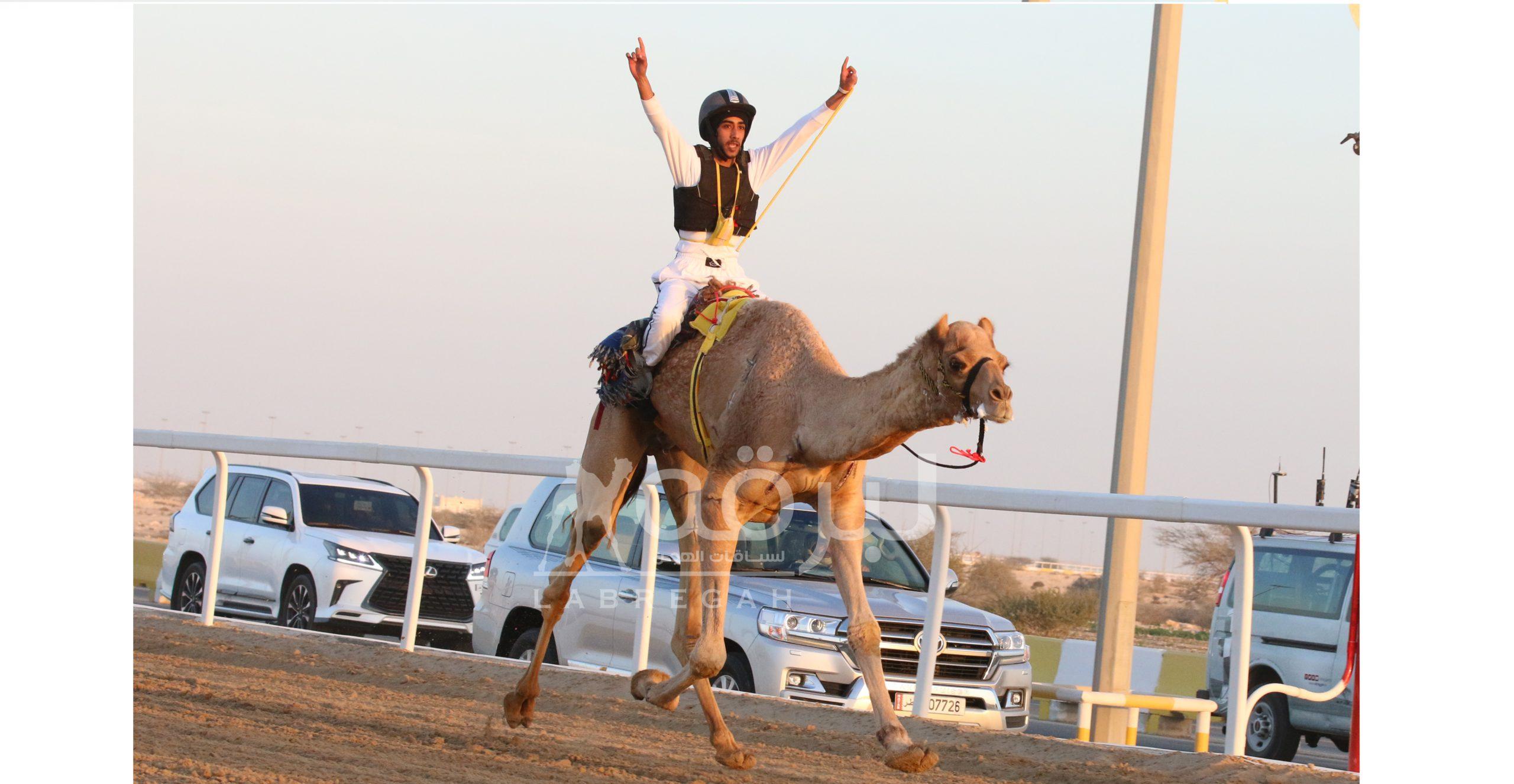 السنيد والصعاق والزعبي أبطال السباق التراثي بمهرجان الأمير الوالد
